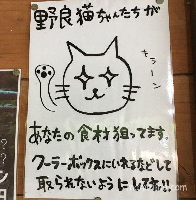 有野実苑の野良猫注意