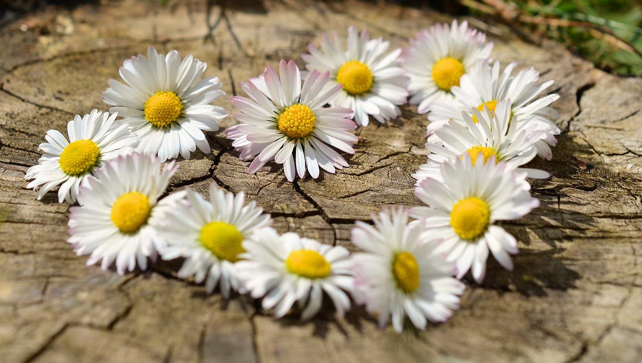 花でできたハート
