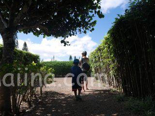 ハワイドールプランテーション パイナップル巨大迷路