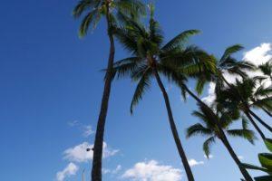 子連れハワイ旅行記 1歳小学生4歳